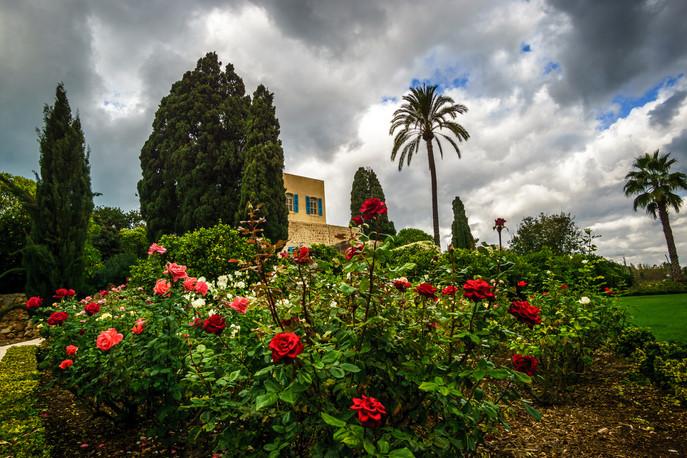 Rose nei giardini