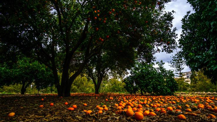 Frutas en los jardines