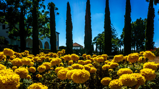 Flores en jardines