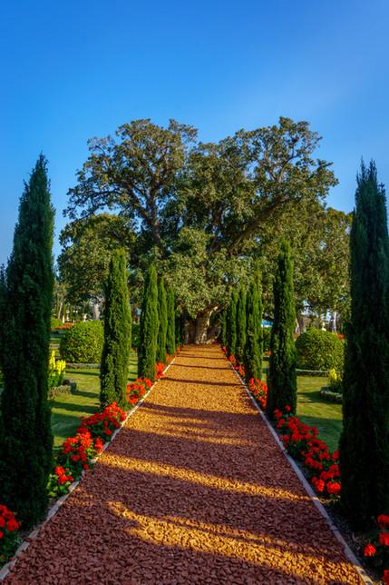 Albero e sentiero nei giardini