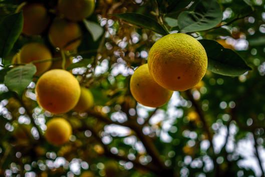 Frutas del jardin