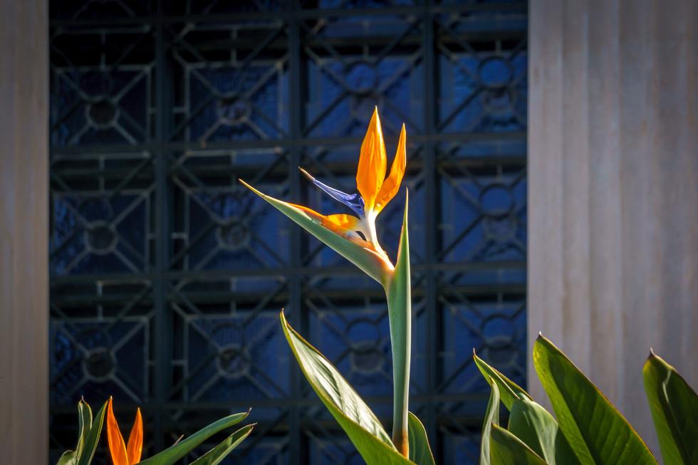 Flor en jardines detras de los Archivos Internacionales