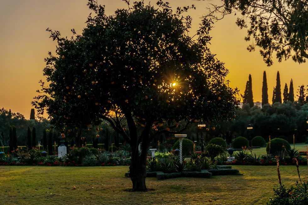 Puesta del sol, árbol que se encuentra frente al Santuario