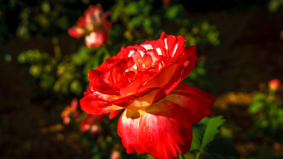 Flor en los jardines