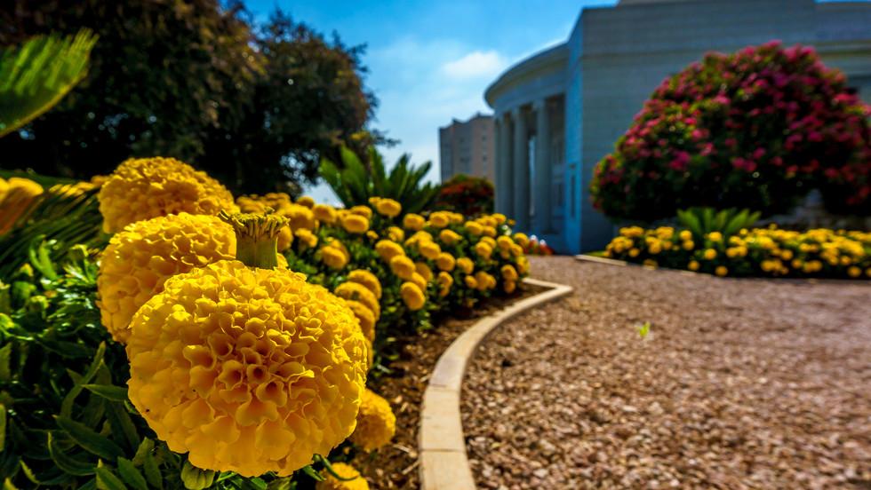 Jardines, Centro Internacional de Enseñanza al fondo