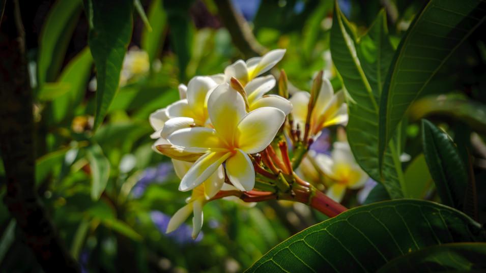 Flor en jardines