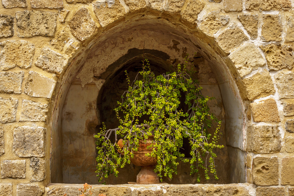 Planta decorando casa