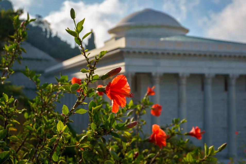 Flor en jardines, Sede de la Casa Universal de Justicia al fondo