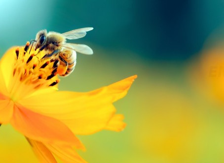 WILD QUEENS, MYSTIC BEES, & A FIELD OF DREAMS