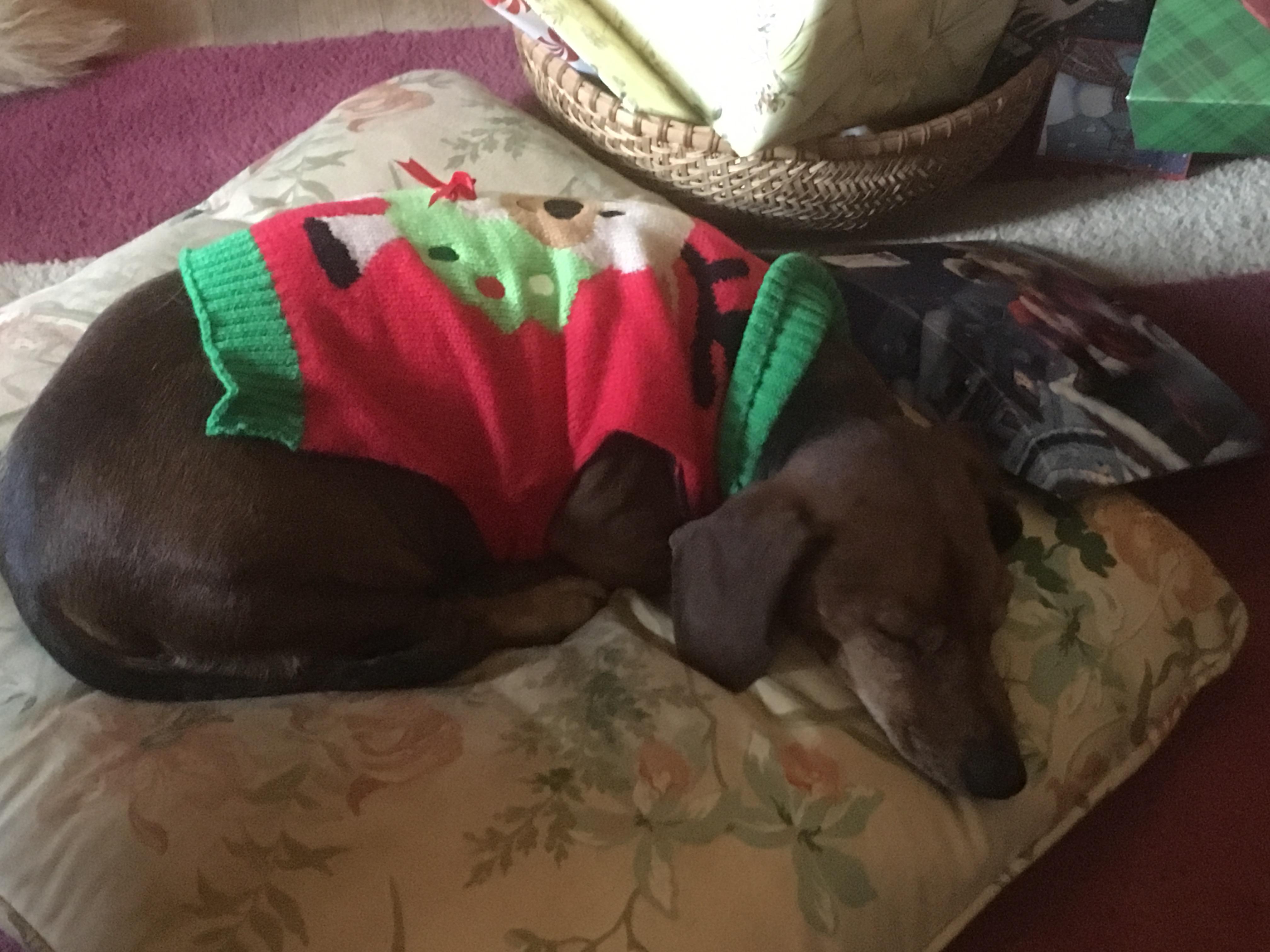 Bravo at Christmas