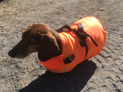 Bravo's Orange Coat