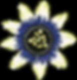 Copy of YogaLanding_Final_VectorFullColo