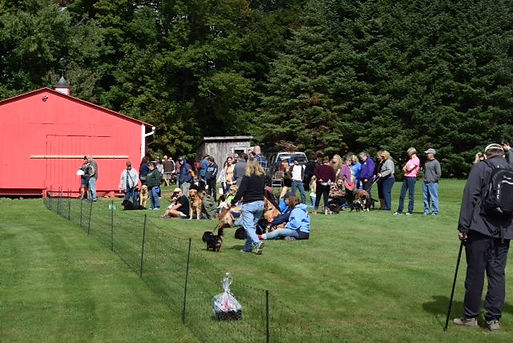 Fastest Dog Contest Spectators