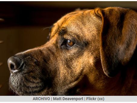 Las 6 mascotas ideales para compartir en un departamento