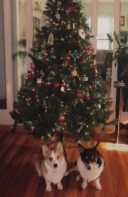 Duchess and Roxy Christmas