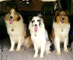 Cooper, Jade, Carter