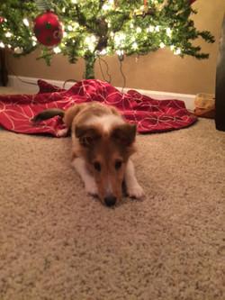 Ellie Christmas