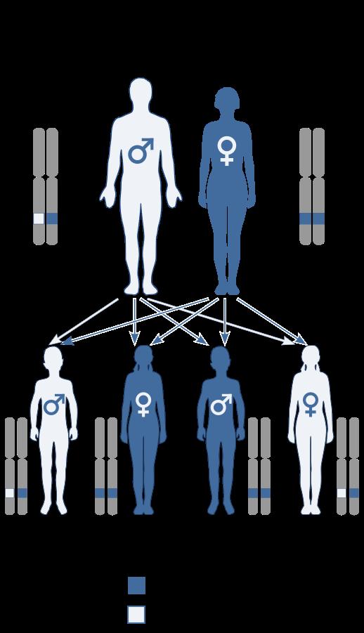 Autosomal dominant allele