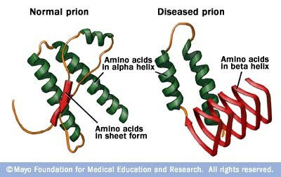 Comparison of normal and diseased prion