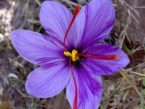 Saffron 0.1gram
