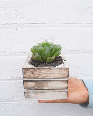succulent 1.jpg
