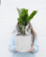 plant.jpg