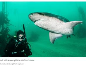 誰說女孩不能愛鯊魚?  波士頓女科學家俱樂部(Gills Club)致力於培育全球女性海洋工程師