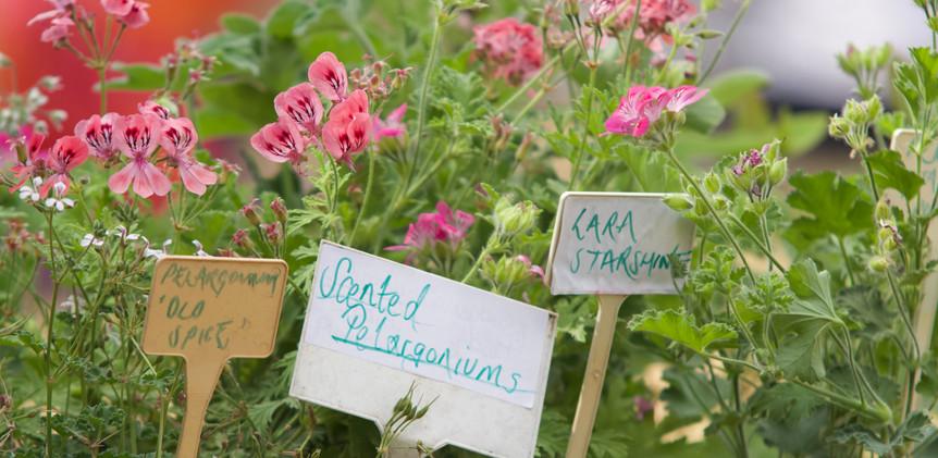 plants and herbs.jpg