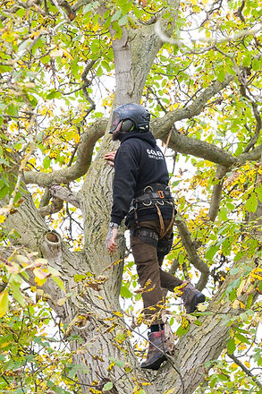 20IB_Golden_Tree_Surgeons_111.jpg