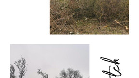 Ecology Survey