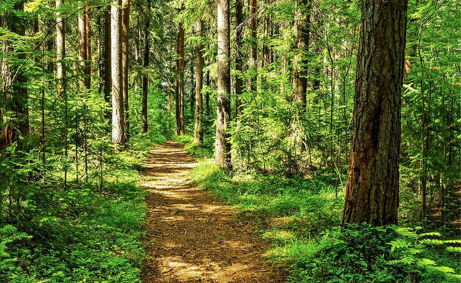 Forest path sunlight scene. Deep forest