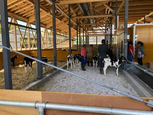 個々の体調管理は「Calf cloud」というIoTを利用し、手持ちのスマートフォンから毎日の哺乳量や健康状態のモニタリングを行います。情報はリアルタイムで更新されるため、「正確性」と「俊敏性」をもって仔牛の異変に気付くことができます。