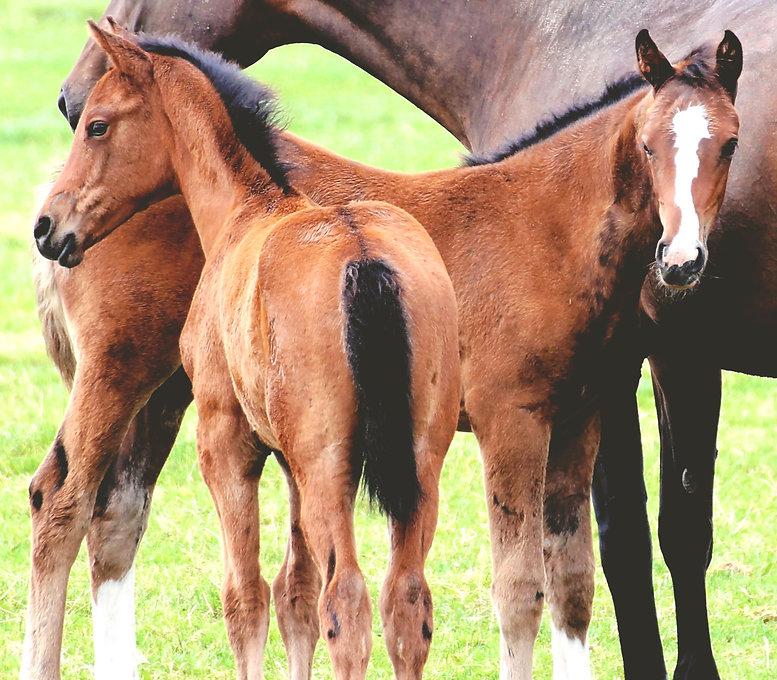 Training of Foals_edited.jpg