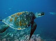 Galapagos5.JPG