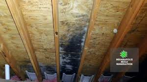 MOLD: THE BANE OF ALL HOMEOWNERS