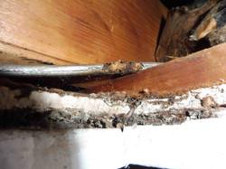 Damaged Wiring
