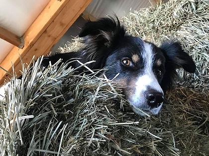 Wyatt in the hay.jpg