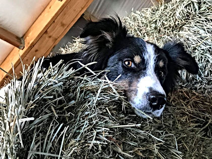 Wyatt in the hay.jpg
