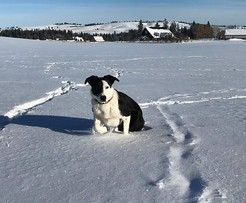 Buster in the snow 1 15 2020.jpg
