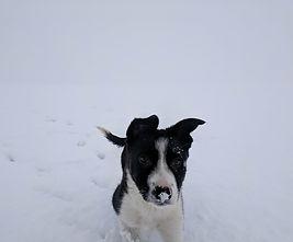 Daoiri in snow 2.jpg