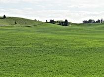 green hillside.JPG