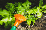 植物の水遣り