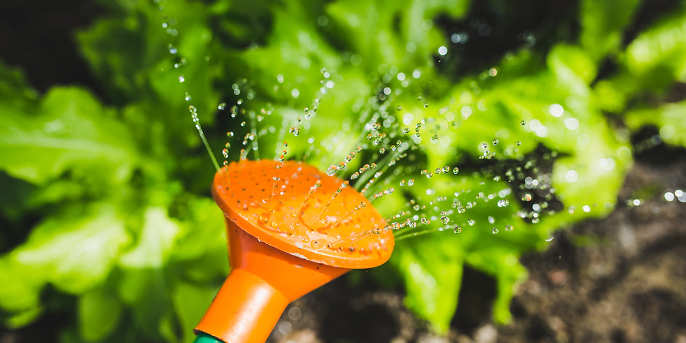 Call out for volunteers to individually help keep the community garden watered - take a large bottle of water with you