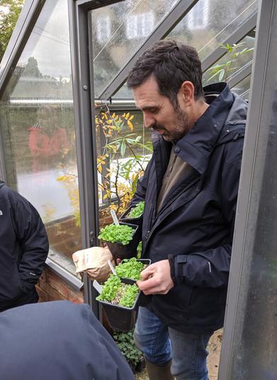 Greenhouse seedlings.jpg