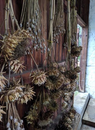 Dried flowers.jpg