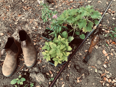 Fall an Ideal Time for Planting Perennials