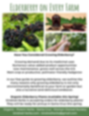 elderberry-every-farm-flyer-ecofarm.png