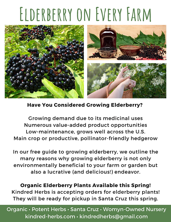 elderberry-every-farm-flyer-ecofarm.png