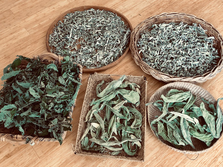 Tips for Drying & Storing Herbs