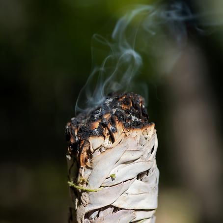 Artemisia-ludoviciana-smudging.png